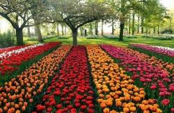 Độc đáo tour du lịch ngắm hoa