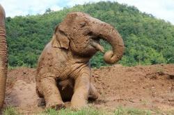 9 chuyến du lịch thú vị cho người yêu động vật