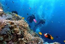 Lặn biển ngắm san hô trong vịnh Nha Trang