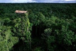 Bộ lạc cả đời sống trên cây vì sợ ma