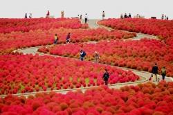 Những điểm đến ấn tượng mùa thu Nhật Bản