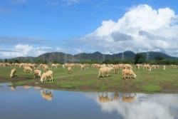 Những điểm cắm trại lý tưởng ở Ninh Thuận dành cho phượt thủ