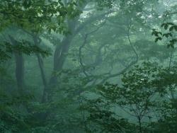 Làm sao để sống sót khi bị lạc vào rừng sâu?
