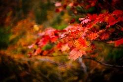 10 điểm lý tưởng để đi du lịch vào mùa thu