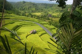 INDONESIA KHÁM PHÁ BALI 4N3Đ TẾT ÂM LỊCH
