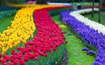CHÂU ÂU MÙA HOA TULIP    ĐỨC - LUXEMBOURG - HÀ LAN - BỈ - PHÁP