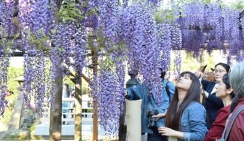 DU LỊCH NHẬT BẢN - TUẦN LỄ VÀNG 2018 TOKYO - YAMANASHI - KYOTO - OSAKA