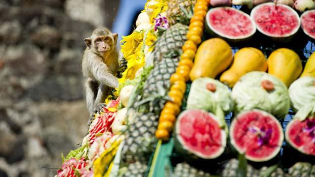 Đại tiệc khỉ - monkey banquet Thailand