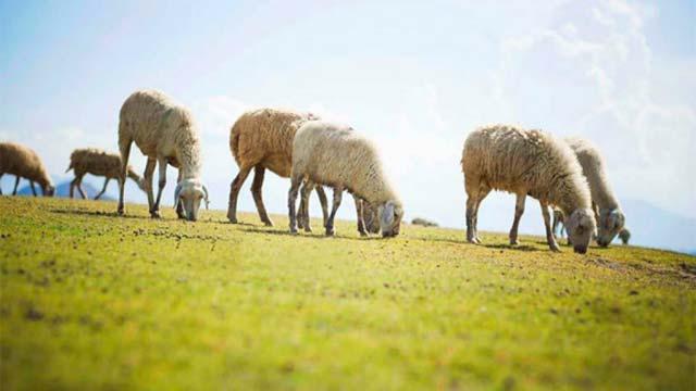 Đồi cừu Suối Nghệ - Tour du lịch dồi cừu giếng đá bạc hồ cốc bình châu 2 ngày 1 đêm Cholontourist