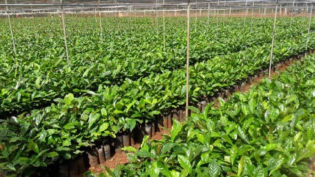 Viện nghiên cứu cà phê Ea Kmat Đắk Lắk